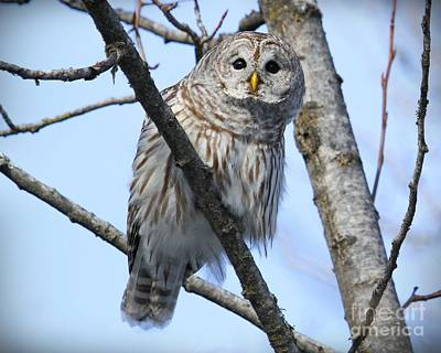 Owl Photograph - Who Goes There by Heather King