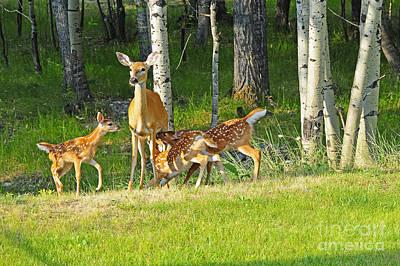 Nursing Deer Photograph - Who Rang The Dinner Bell? by Gary Beeler