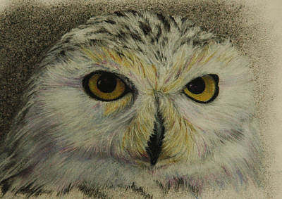 Wild At Heart Pastel - Who Sees Who IIi by Linda Harrison-parsons