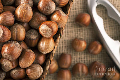 Whole Hazelnuts Art Print by Charlotte Lake