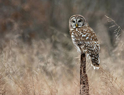 Photograph - Whooo Goes There by Linda Shannon Morgan