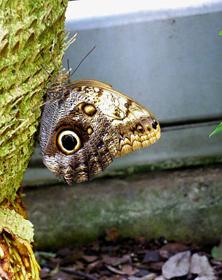 Photograph - Whoo's Looking At You by Judy Wanamaker