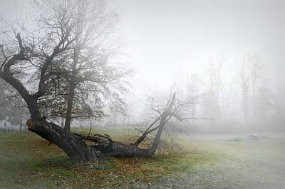 Tree Roots Photograph - Who's Sorry Now by Diana Angstadt