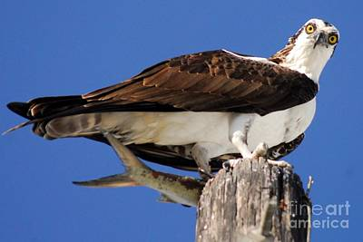 Osprey Wall Art - Photograph - Who's There by Quinn Sedam