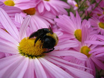 Photograph - Why Bees Can Carry Pollen by Teresa Cox