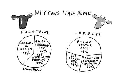 Cow Drawing - Why Cows Leave Home by Michael Crawford