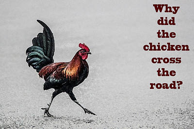 Digital Art - Why Did The Chicken Cross The Road by Photographic Art by Russel Ray Photos