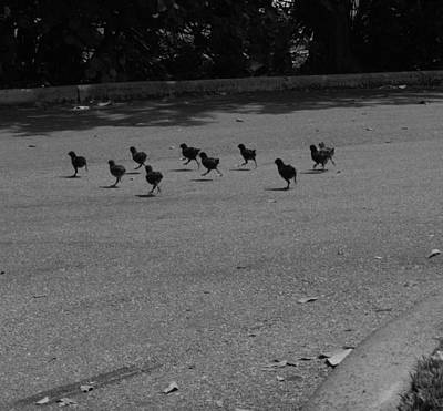 Photograph - Why Did The Chicken Cross The Road by Susan Sidorski
