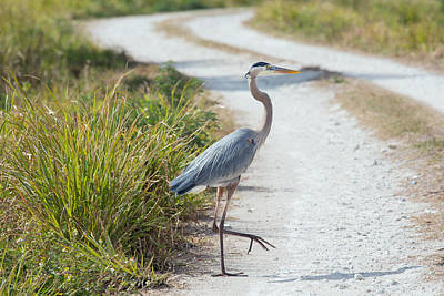 Why Did The Heron Cross The Road Art Print