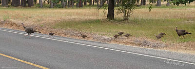 Photograph - Why Did The Turkeys Cross The Road by Mick Anderson