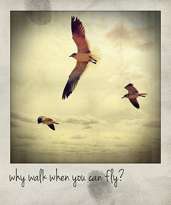 Personalized Name License Plates - Why Walk When You Can Fly? Polaroid by Bradley R Youngberg