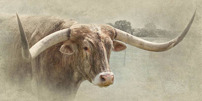 Longhorn Photograph - Wide by David and Carol Kelly