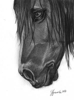 Gray Mare Drawing - Wide Eyed Wanderer by J Ferwerda
