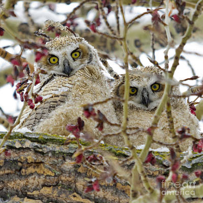 Photograph - Wide-eyed Wonders by Dee Cresswell