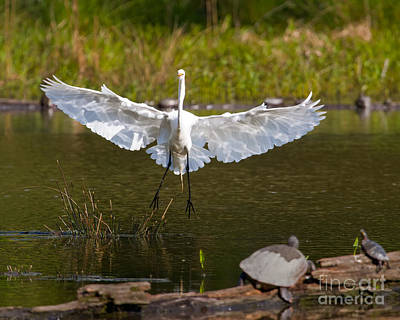 Photograph - Wide Landing by Dale Nelson