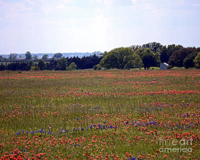 Photograph - Wide Open Spaces. April In Texas by Connie Fox