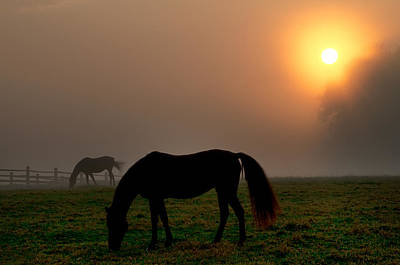 Widener Horse Farm At Sunrise Art Print by Bill Cannon