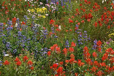 Photograph - Widflowers Mixed 3 by Robert Lozen
