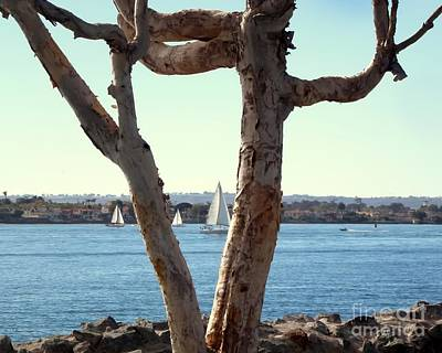 Photograph - Wierd Tree In S D by Barbie Corbett-Newmin