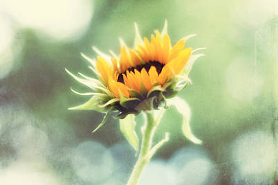 Sunflower Art Photograph - Wild And Free by Amy Tyler