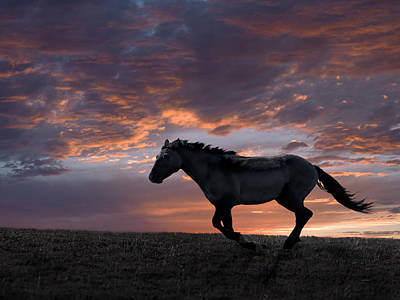 Horse Photograph - Wild And Free by Leland D Howard