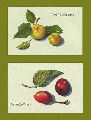 Plum Drawing - Wild Apples And Plums by Joyce Geleynse