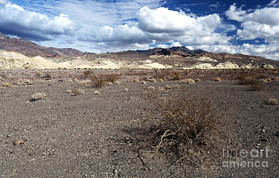 Photograph - Wild At Death Valley by John Rizzuto