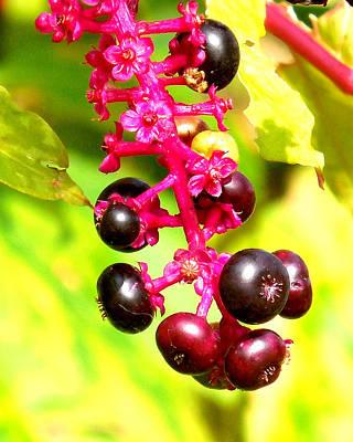 Photograph - Wild Berries 2013 by Glenn McCurdy