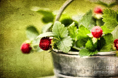 Wild Berries Art Print by Darren Fisher