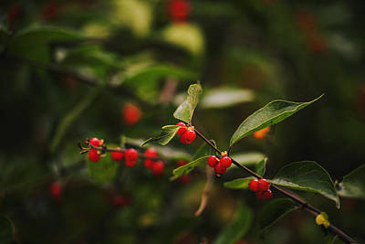 Kathryn Photograph - Wild Berries by Vishwanath Bhat