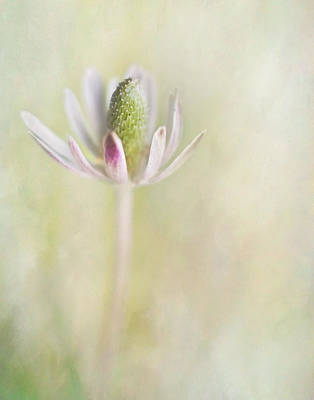 Photograph - Wild Bloom I by David and Carol Kelly