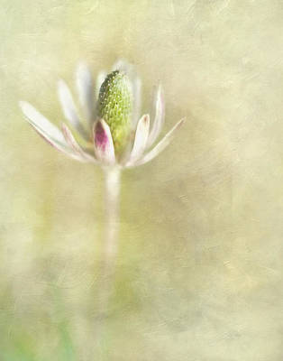 Photograph - Wild Bloom II by David and Carol Kelly