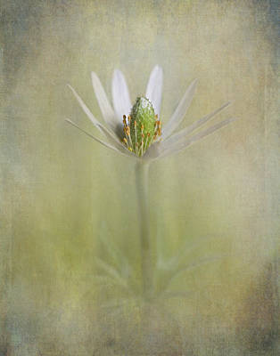 Photograph - Wild Bloom IIi by David and Carol Kelly