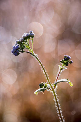 Photograph - Wild Bokeh 1 by Brad Grove