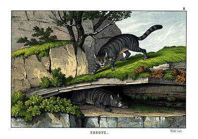 Wild Cat Drawing - Wild Cat by Splendid Art Prints