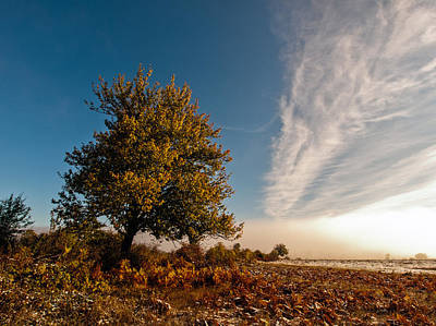 Autumn Landscape Photograph - Wild Cherry by Davorin Mance