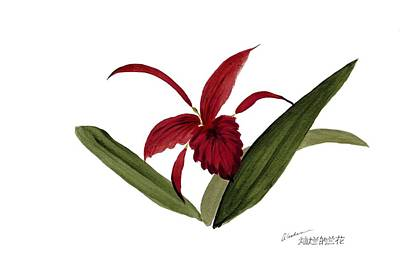 Painting - Wild Chinese Orchid #3 by Alethea McKee
