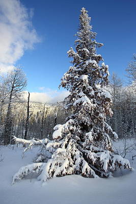 Photograph - Wild Christmas Tree by David Andersen