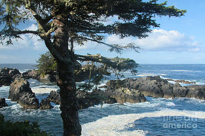 Photograph - Wild Coast by Frank Townsley