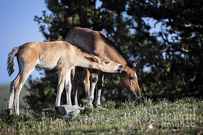 Wild Horses Photograph - Wild Colt-animals-image-2 by Wildlife Fine Art