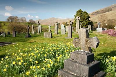 Grave Photograph - Wild Daffodils In Troutbeck Churchyard by Ashley Cooper