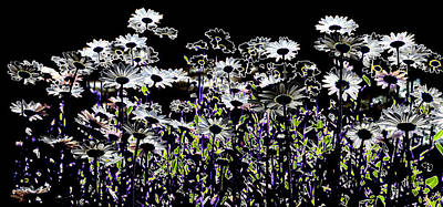 Digital Photograph - Wild Daisies II by David Patterson