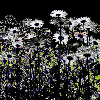 Wild Daisies IIi Art Print by David Patterson