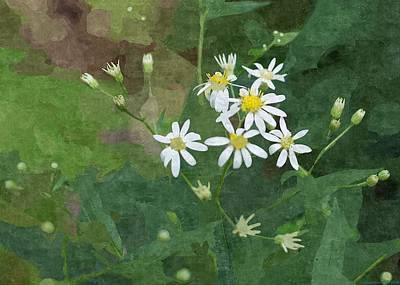 Wild Daisys  Art Print by Rosemarie E Seppala