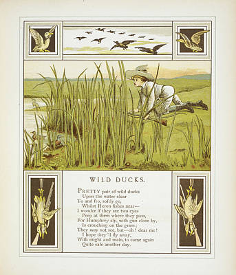 Wild Ducks Art Print by British Library