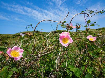 Photograph - Wild Dune Rose No4 by Martin Liebermann