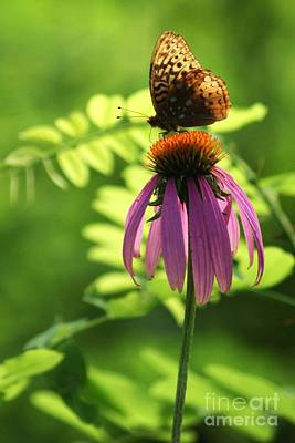 Photograph - Wild Echinacea Snack by Julie Clements