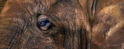 Mixed Media - Wild Eyes - African Elephant by Carol Cavalaris