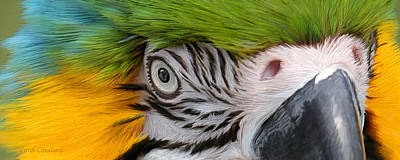 Parrot Art Mixed Media - Wild Eyes - Parrot by Carol Cavalaris