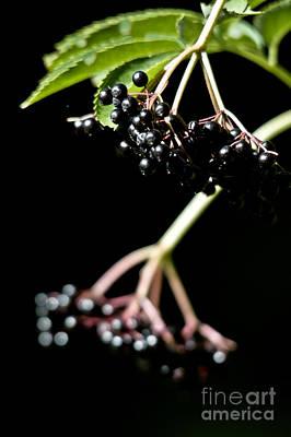 Photograph - Wild Fall Berries by Cheryl Baxter